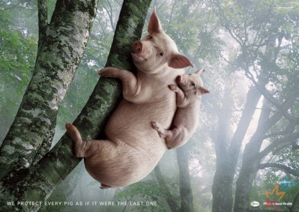 Свинки в джунглях