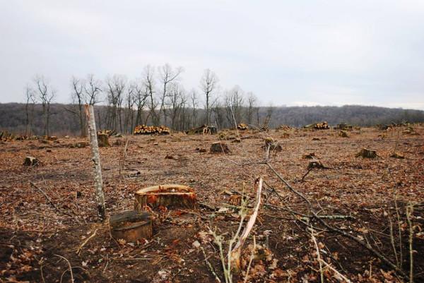 Декоммунизация леса