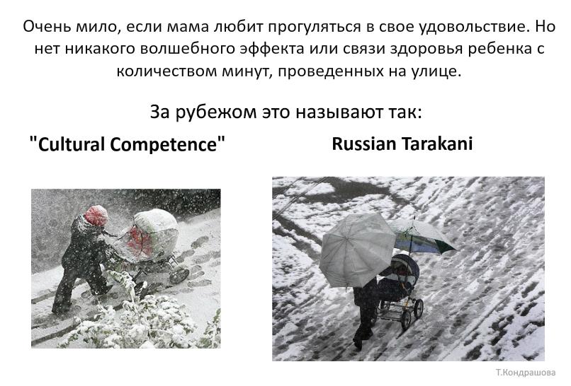 russian tarakani