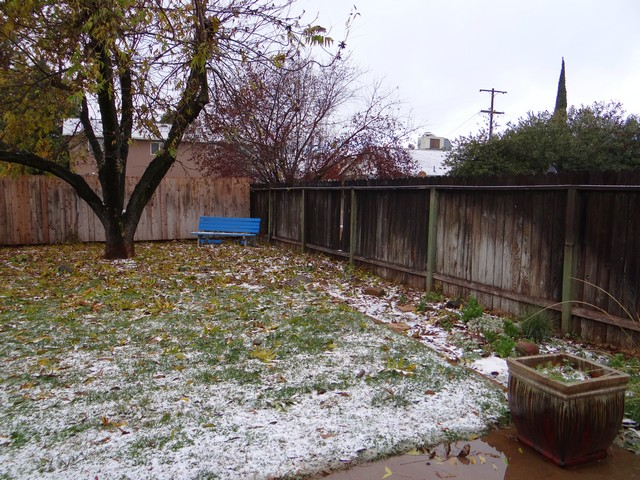 snow around the pecan tree!