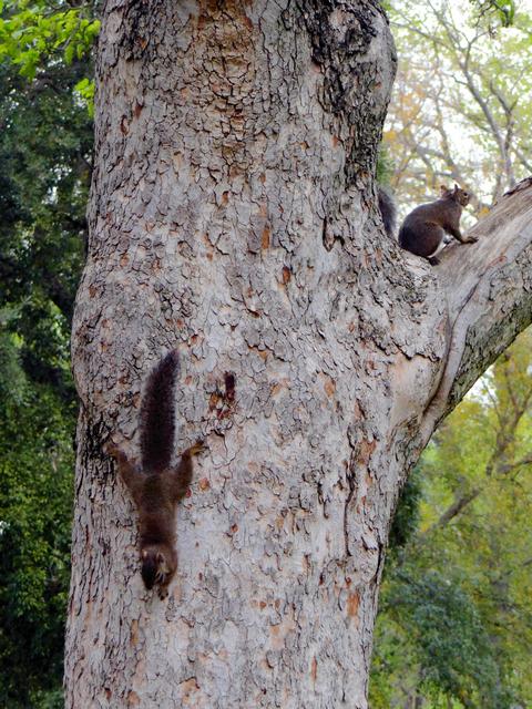 squirrels in McKinley Park, Sacramento