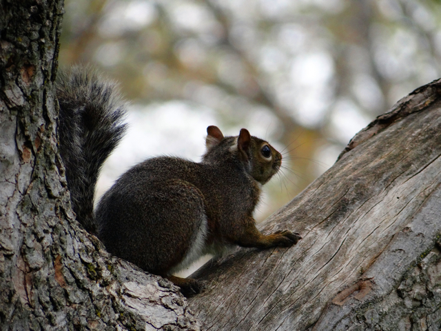 squirrel in McKinley Park, Sacramento