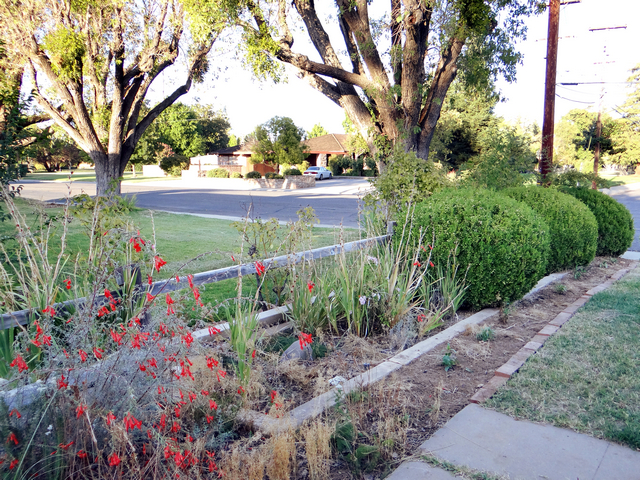 new flowerbed, September 2014