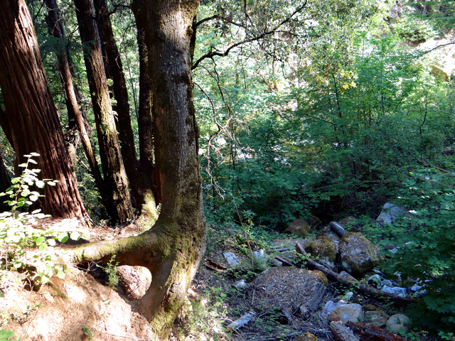 Tribute Trail 6.jpg