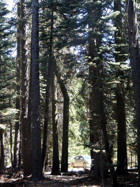 Silver Lake campsite 8.jpg