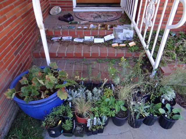 nativeplants.jpg