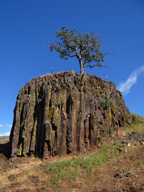 tree near Ravine Falls