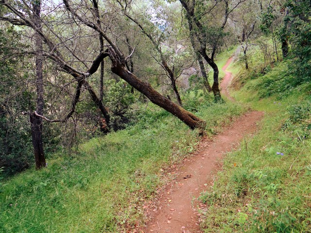 trail near Smittle Creek day use area