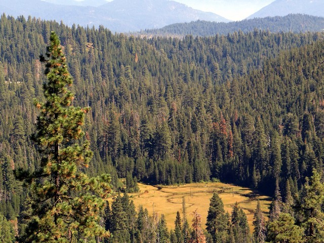 meadow, seen from trail