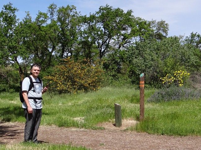 Barry with flannelbush and bush poppy at Cache Creek Nature Preserve