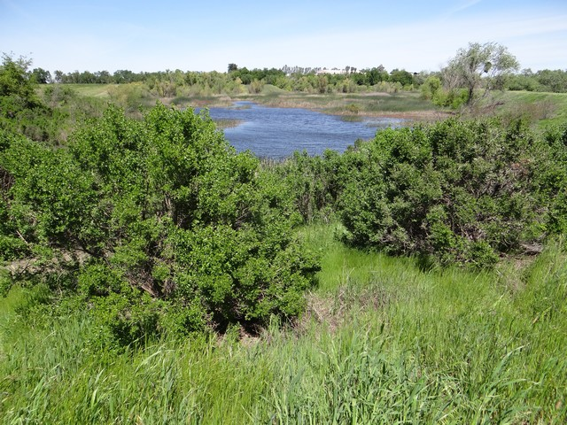 west end of pond