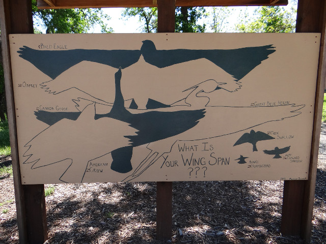 What Is Your Wing Span?