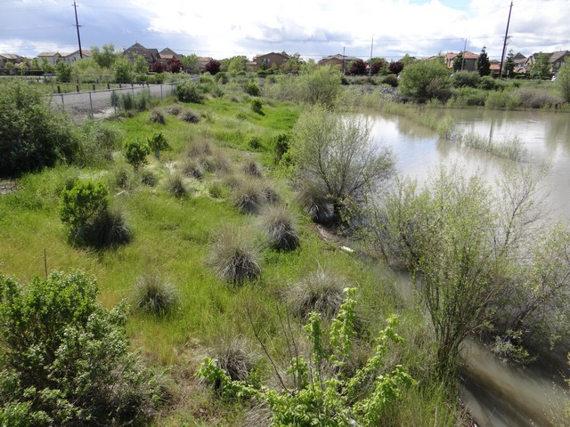 Mavis Henson Field