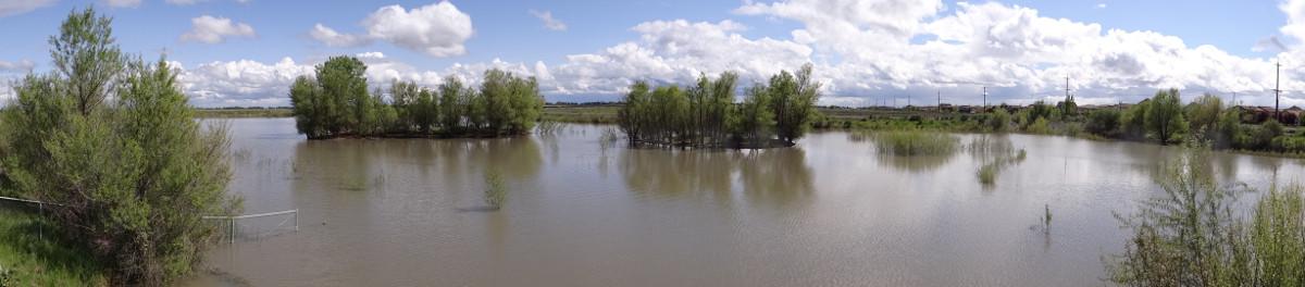 Mavis Henson Field panorama