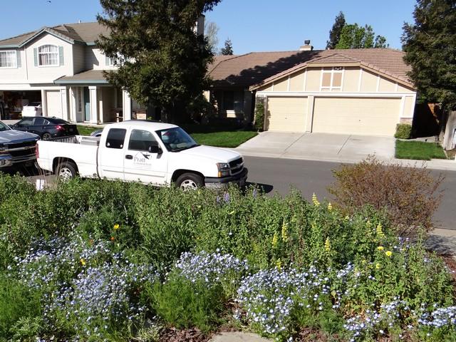 front yard, April 2017