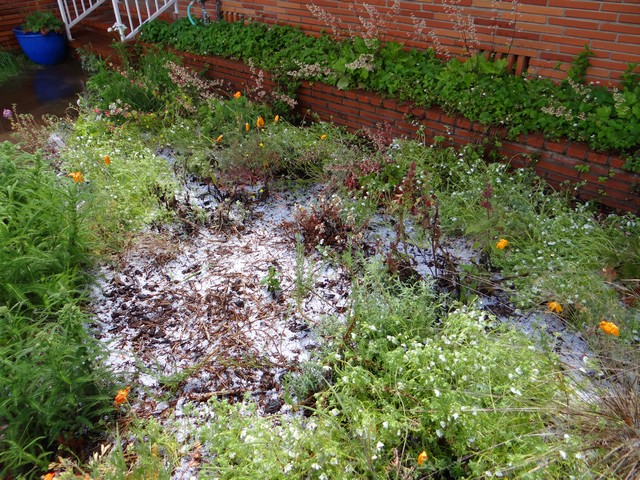 front yard after a hailstorm, April 2017
