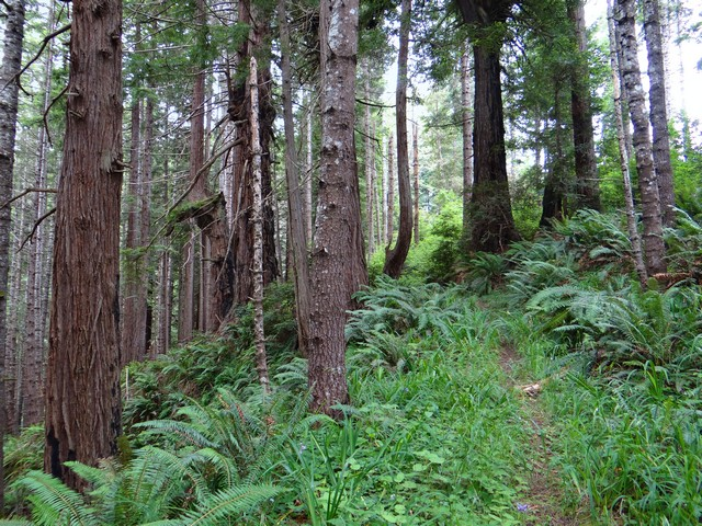 Enchanted Forest trail