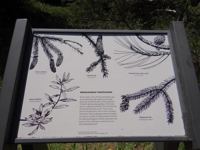 Krummholz Vegetation