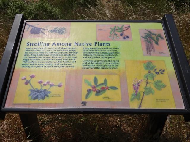 Strolling Among Native Plants