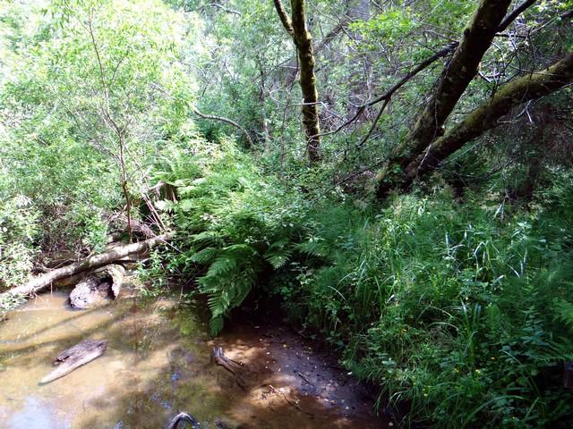 Jug Handle Creek
