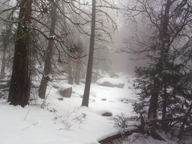 Artist Point Trail, February 27, 2018