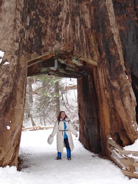 me in Dead Giant Tunnel Tree, Tuolumne Grove of Giant Sequoias, February 28, 2018