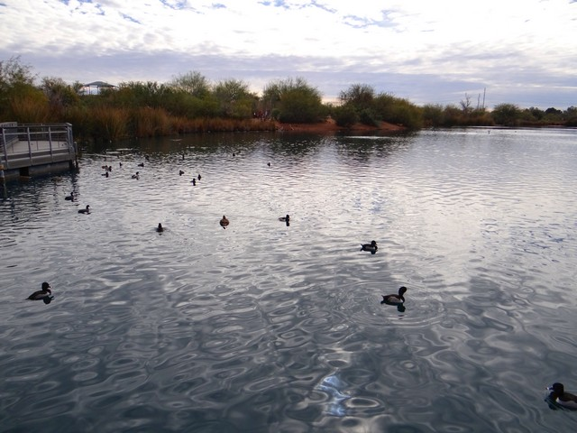 Riparian Preserve at Water Ranch in Gilbert