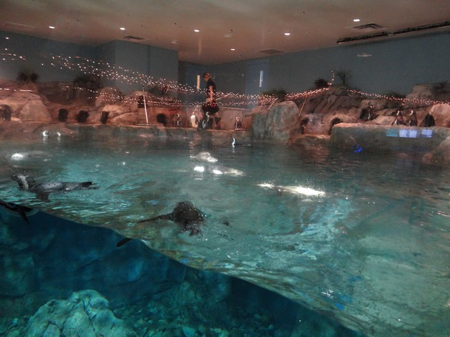 penguins at the OdySea Aquarium in the Desert