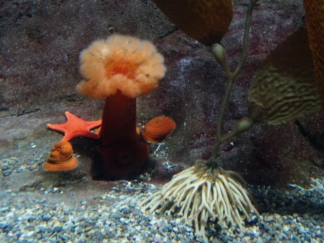 OdySea Aquarium in the Desert