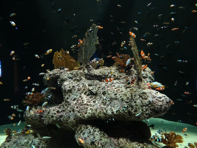OdySea Aquarium in the Desert