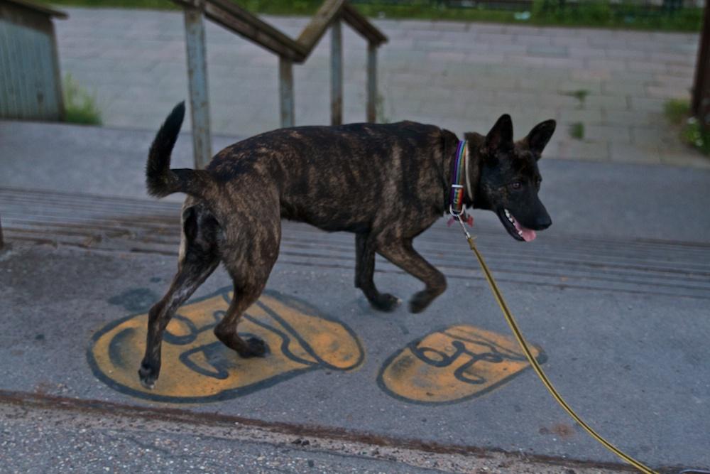 Частное с псом фото 802-238