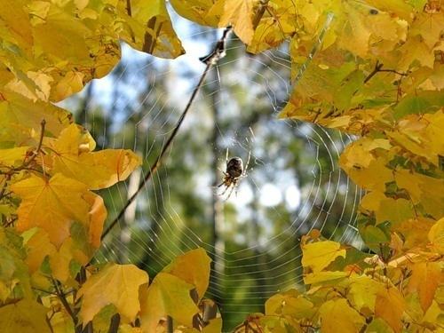 Осень_Паутинка.jpg