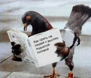Сраный_голубь.jpg