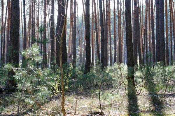 forest1 copy
