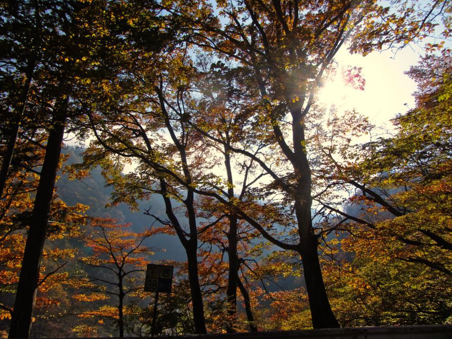 осень никко