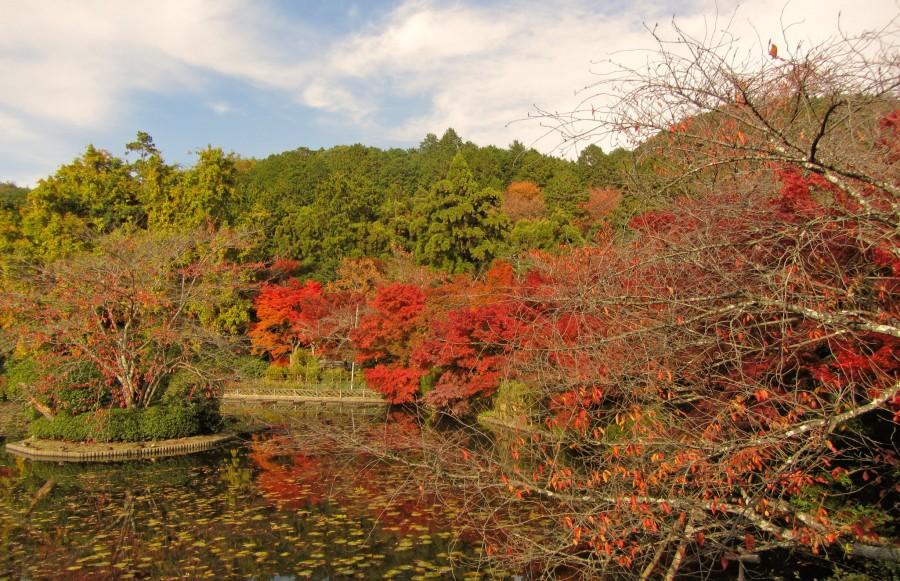 парк в Киото