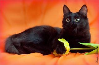 ru_cats: Впервые предстоит везти орущее чучело в