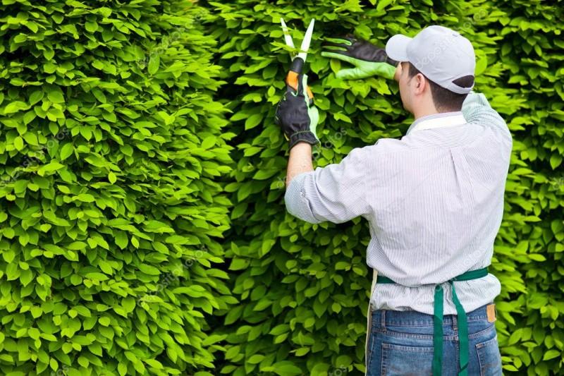 Как получить специальность садовода и найти работу в Петербурге?