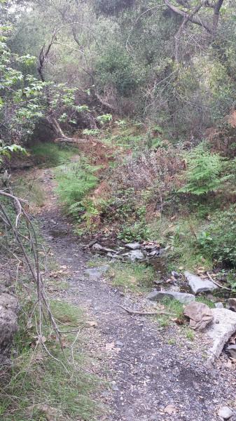 Sullivan's Canyon