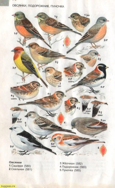 О птицах и про химию