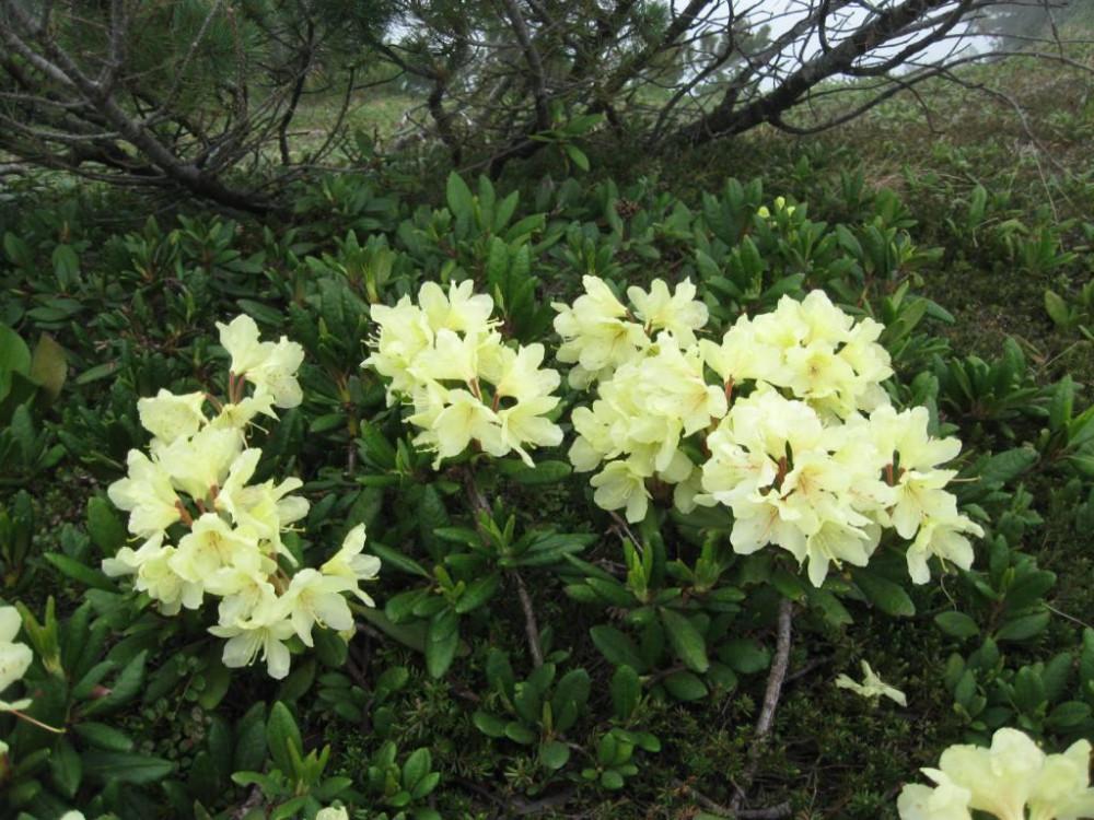 горные цветы.JPG
