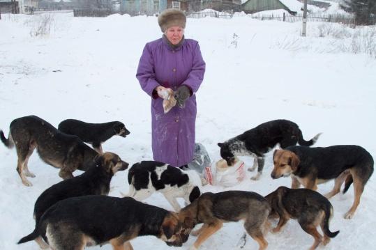 Собаки загрызают людей насмерть в Подмосковье