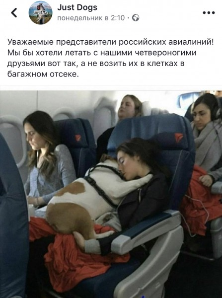 Собаки в самолёте