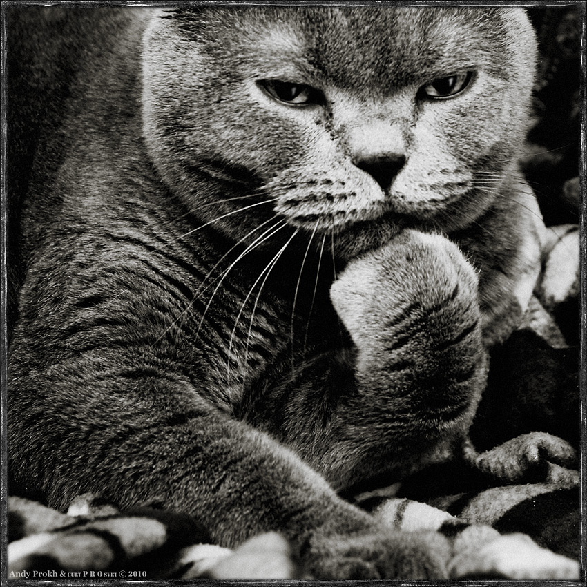 кот-мыслитель
