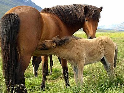лошадушки