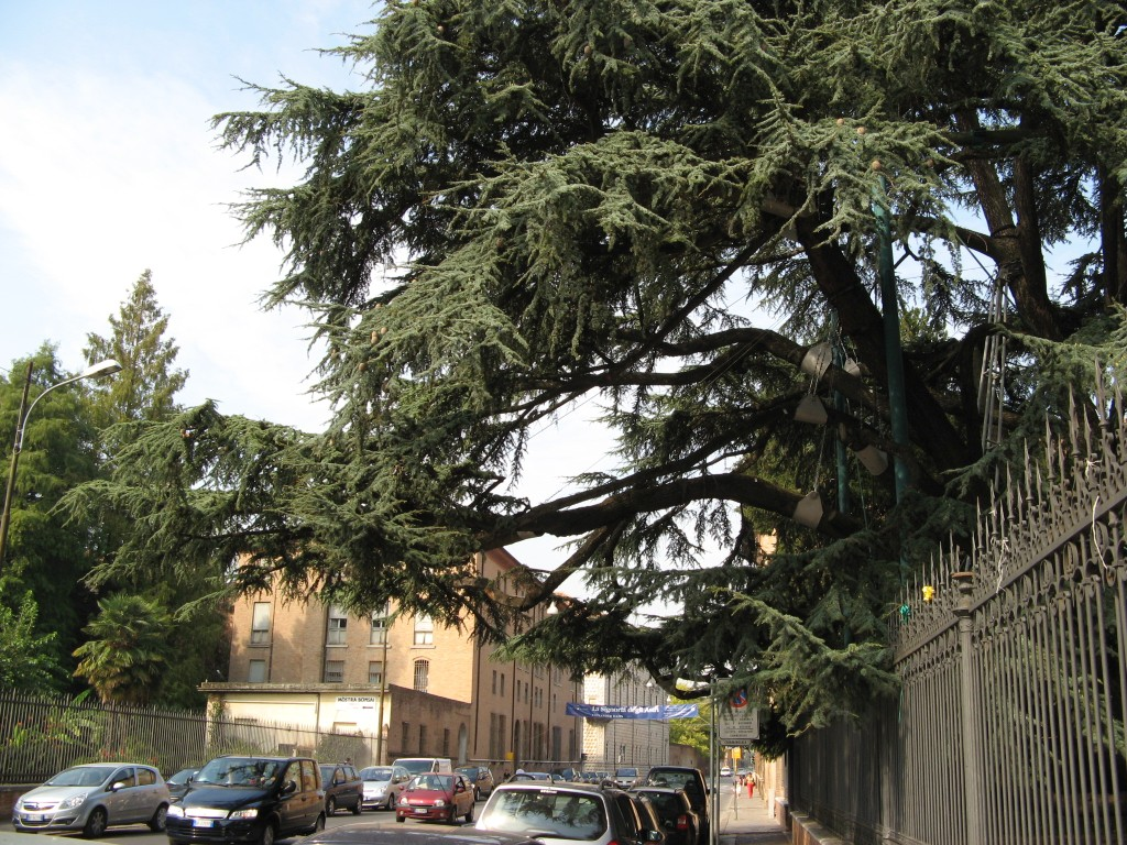 2007_09_15_Ferrara_1396