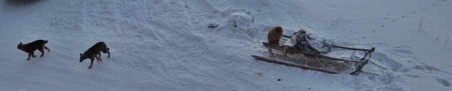 три собаки-ушли гулять)