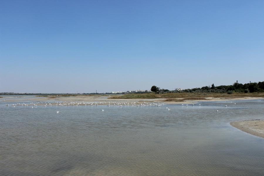 лиман и чайки