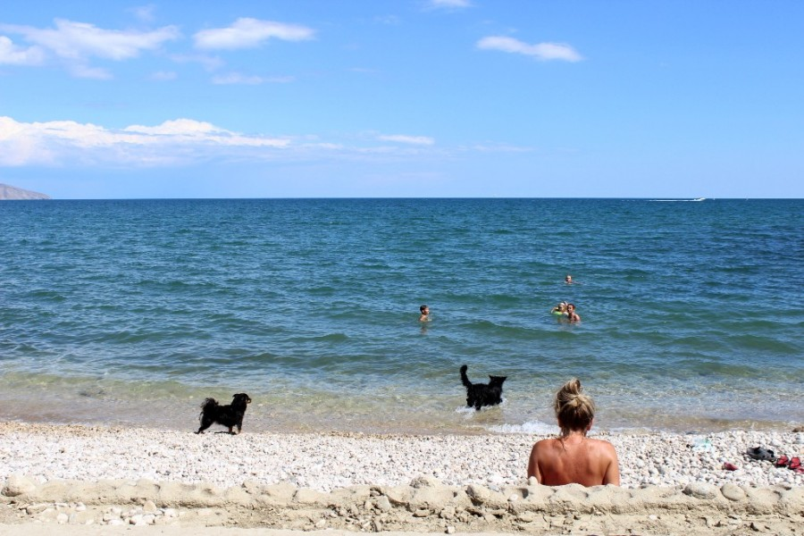 собачки и море)