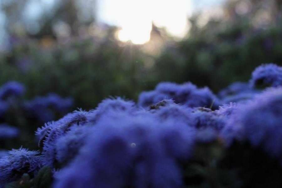 29 августа-цветочки поближе